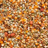 BJF_Feeds_Beyers_Koopman_All_in_1_Goldcorn_Premium_Feed