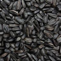 BJF_Feeds_Black_Sunflower_Seeds_20kg