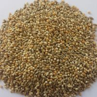 BJF_Feeds_Bugie_50-50_Feed_20kg