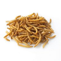 BJF_Feeds_Dried_Mealworms_5kg