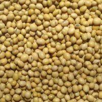 BJF_Feeds_Toasted_Soya_Beans