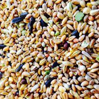 BJF_Feeds_Wild_Bird_Seed_Mix